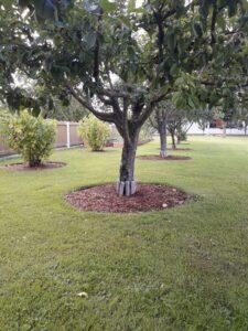 Viljapuu1